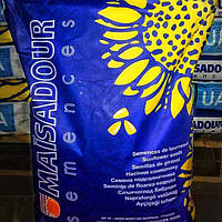 Семена подсолнечника, Maisadour, MAS 89 М