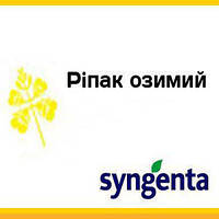 Семена рапса, Syngenta, NK Petrol