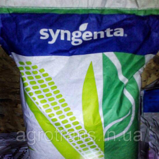 Семена кукурузы, Сингента, СИ НОВАТОП, ФАО 240