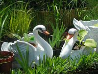 Лебедь Б цветочник