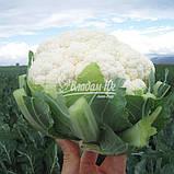 Семена цветной капусты Ардент F1, 2500 семян, фото 4