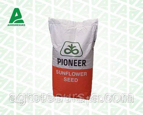 Семена подсолнечника П64ГГ98, Пионер (P64HH98)