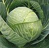 Семена капусты Рапидион F1, 2500 семян