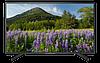 Телевизор KD-49XF7005