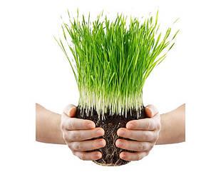 Растениеводство и агрономия