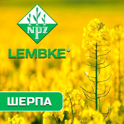 Семена озимого рапса Шерпа  (Lembke) , фото 2