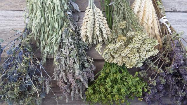 Сухоцветы, декоративные травы