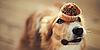 Самые вредные продукты для собак