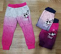 Спортивные штаны для девочек оптом, Miss Girl, 98-128 см,  № CSQ-86078