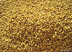 Семена сидератов, кормовых трав, медоносов весовые