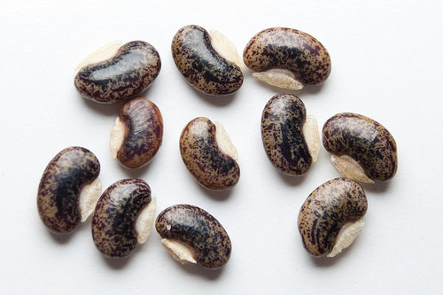 Семена десмодиума