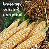 Семена сладкой кукурузы РАКЕЛЬ F1, 5000 семян, фото 3