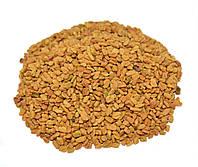 Пажитник сенной семена (Фенугрек, Шамбала)