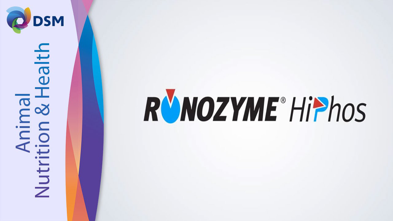 Фермент РОНОЗИМ ХайФос (GT) - фитаза