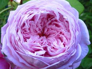 Романтические розы