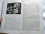Происхождение человека и древнее расселение человечества, фото 5