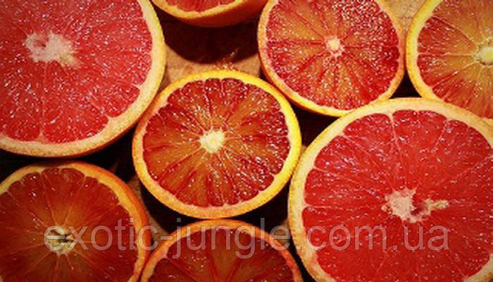 "Апельсин  Россо, ""Rosso"" до 20 см."