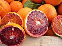 Апельсин Ванилья Сангуино (Vainiglia Sanguigno, arancio dolce) Комнатный