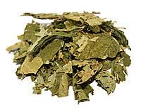 Лещина обыкновенная листья (орешник, лесной орех), фото 1
