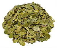 Толокнянка обыкновенная листья (медвежье ушко) 100 грамм, фото 1