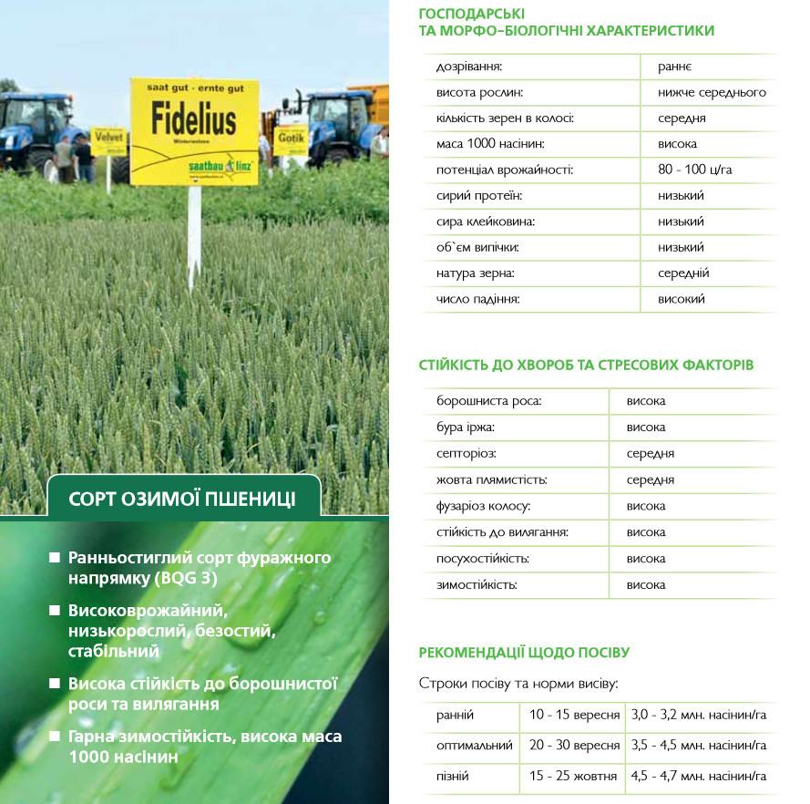 Озима пшениця ФІДЕЛІУС   СН-1  - 80 - 100 ц/га Німеччина