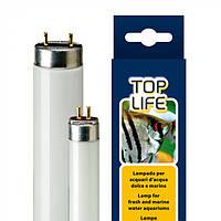 Неоновая лампа для аквариумов с морской водой TOPLIFE 8W T5