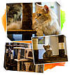 """Когтеточка """"Игровая площадка"""" коричнево-бежевый Pethaus, 50x50x130 см, фото 6"""