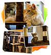 """Когтеточка """"Игровая площадка"""" бежевая Pethaus, 50x50x130 см, фото 4"""