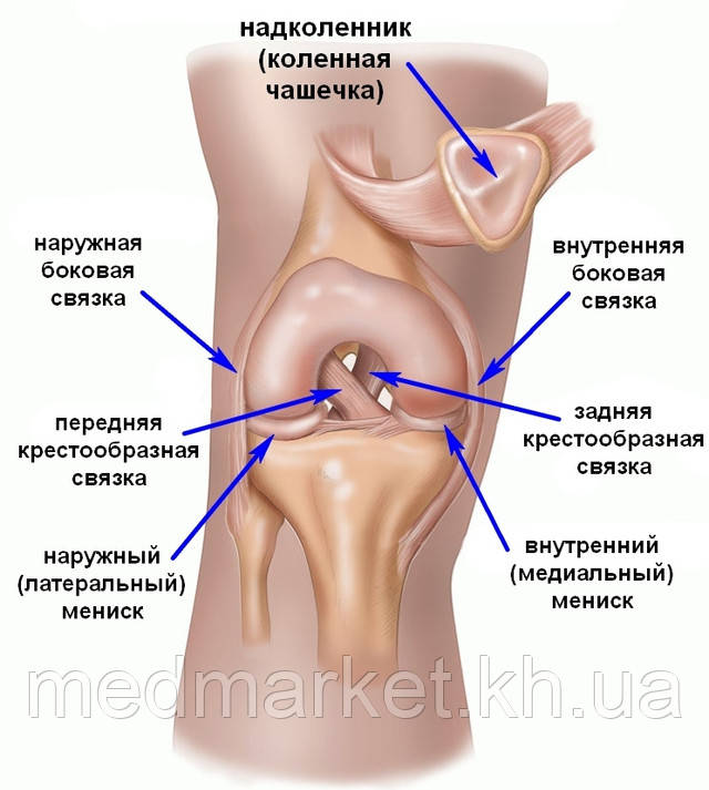 http://travmaorto.ru/files/image/knee/knee_pain/koleno.jpg