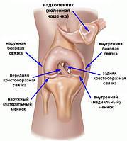 Повреждения и разрывы малоберцовой коллатеральной связки