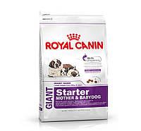 Royal Canin giant starter сухой корм (щенки до 2 месяцев, беременные и кормящие суки) - 1 кг