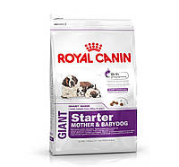 Royal Canin  giant starter сухой корм (щенки до 2 месяцев, беременные и кормящие суки) - 15 кг