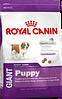 Royal Canin giant puppy сухой корм для щенков гигантских пород (до 8 месяцев) - 4 кг