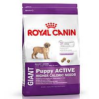 Royal Canin Giant junior Active сухой корм для активных щенков гигантских поро до 8 месяцев - 15 кг