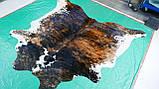 Натуральная очень экзотической расцветки шкура коровы, фото 3