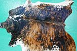 Натуральная очень экзотической расцветки шкура коровы, фото 4