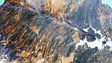 Натуральная очень экзотической расцветки шкура коровы, фото 5
