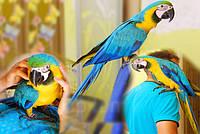 Попугай Ара Сине-желтый