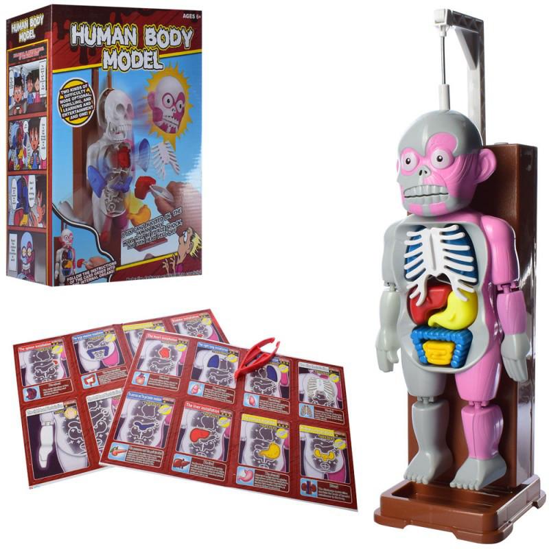 """Настольная игра обучающая Скелет """"Анатомия"""" - Модель человеческого тела Human Body Model"""