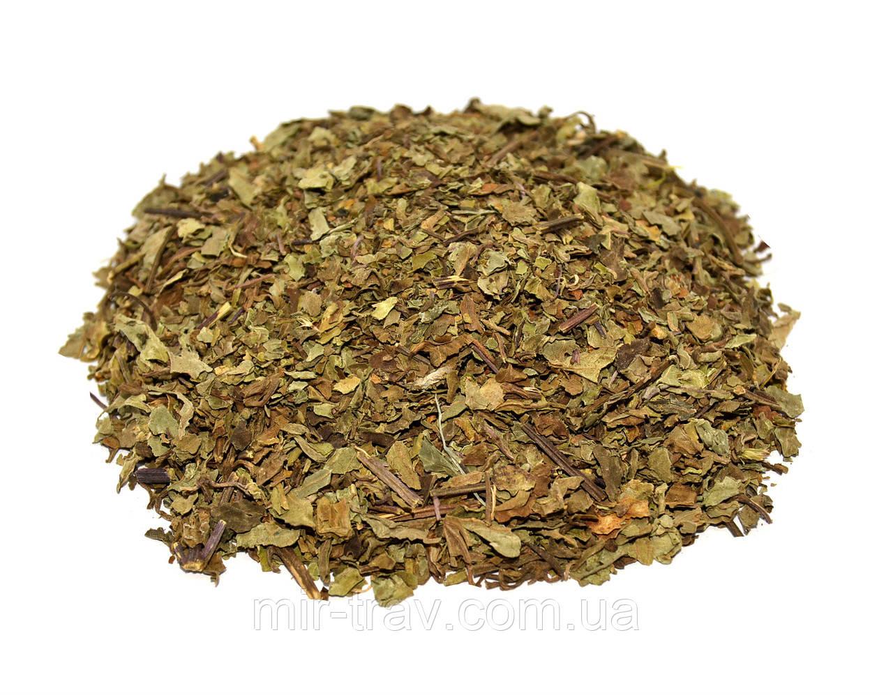 Ортосифон трава