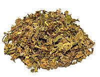 Яснотка желтая трава (Зеленчук)