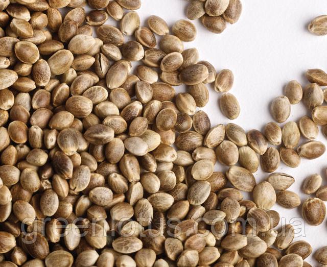 Семена коноплю конопля герм