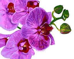 Картина по номерам Величественная орхидея, 40x50 см., Домашнее искусство