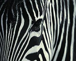 Картина по номерам Полосатая магия, 40x50 см., Домашнее искусство