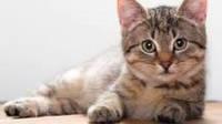Препараты и товары для кошек
