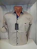 Рубашка мужская Paul Smith длинный рукав, мелкий узор,  №12.08.2018  стрейч 005 \ купить рубашку