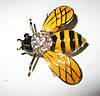 Хорошенькая брошь- пчелка   от студии LadyStyle.Biz