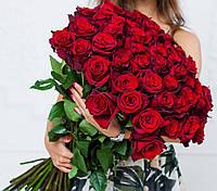 Букет из 51 розы сорта Эксплорер, Эквадор