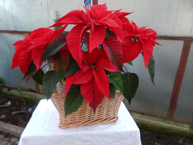 Подарочные корзины и цветочные корзины из лозы