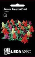 Семена сальвии Редди, 10 сем., блестящая смесь